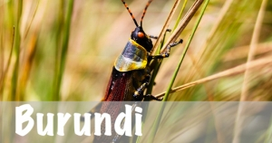 Burundi National Parks