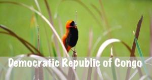 DRC National Parks