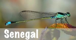 Senegal National Parks