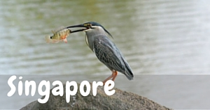 Singapore, National Parks Guy