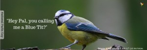 Hey Pal, You calling me a Blue Tit- - Featured Header - National Parks Guy