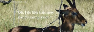 Oh I do like this new ear cleaning salon. - 30112015