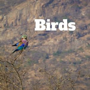 Bird Gallery, National Parks Guy (1)