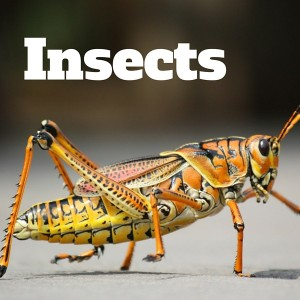 Insect Gallery, National Parks Guy (1)