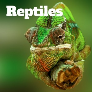 Reptiles Gallery, National Parks Guy (1)